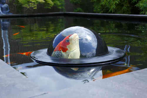 Floating Fish Dome (M)